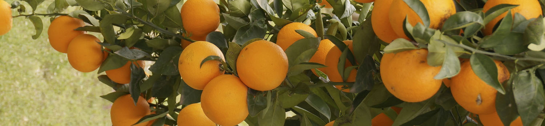 naranjas1ok-banner